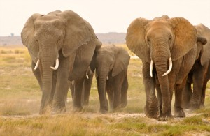 Elephant #4
